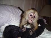 Замечательное обезьян