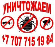 Уничтожение Клопов Актау
