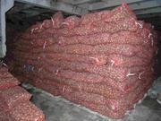 Картофель оптом,  со склада производителя.