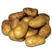 Картофель от производителей,  поставки по Казахстану